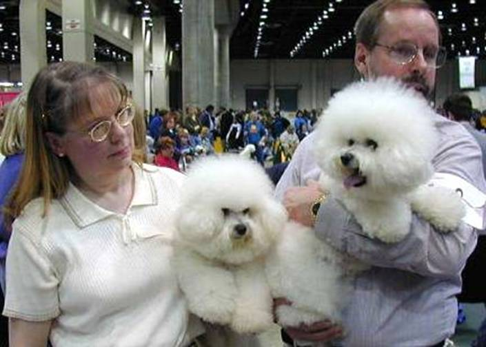 SHOWBOAT BICHONS